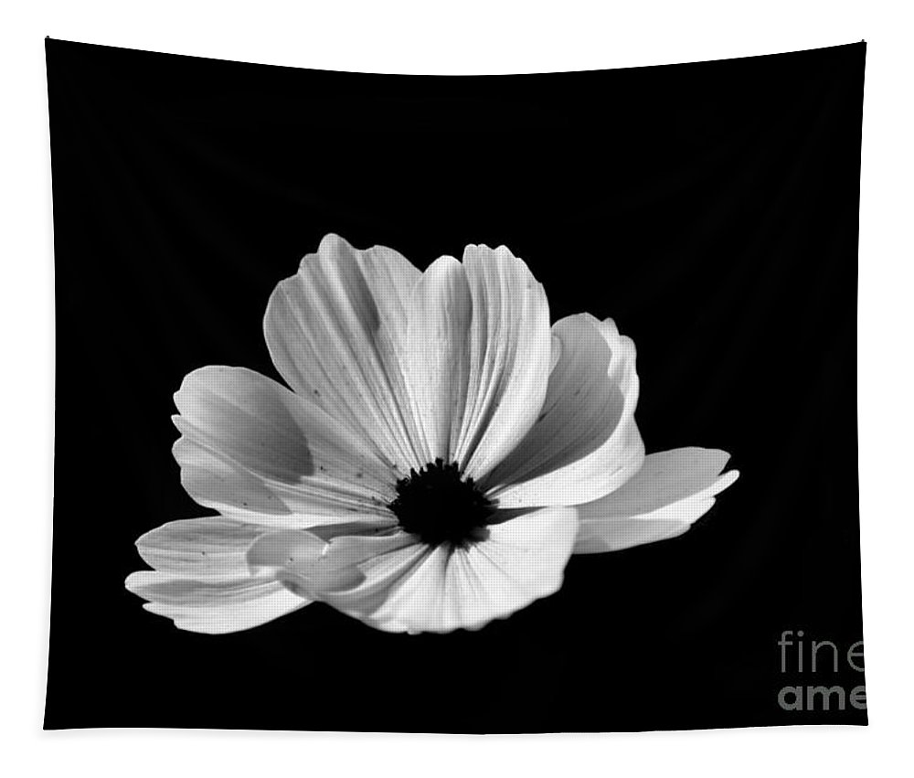 Flower Tapestry featuring the photograph Cosmo Black And White by Donna Brown