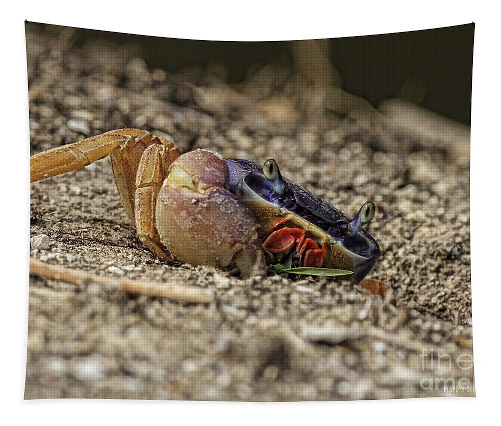 Crab Tapestry featuring the photograph Crab Anyone by Deborah Benoit