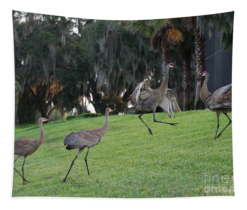 Sandhill Cranes Tapestry featuring the photograph Dad's Showing Off by Carol Groenen