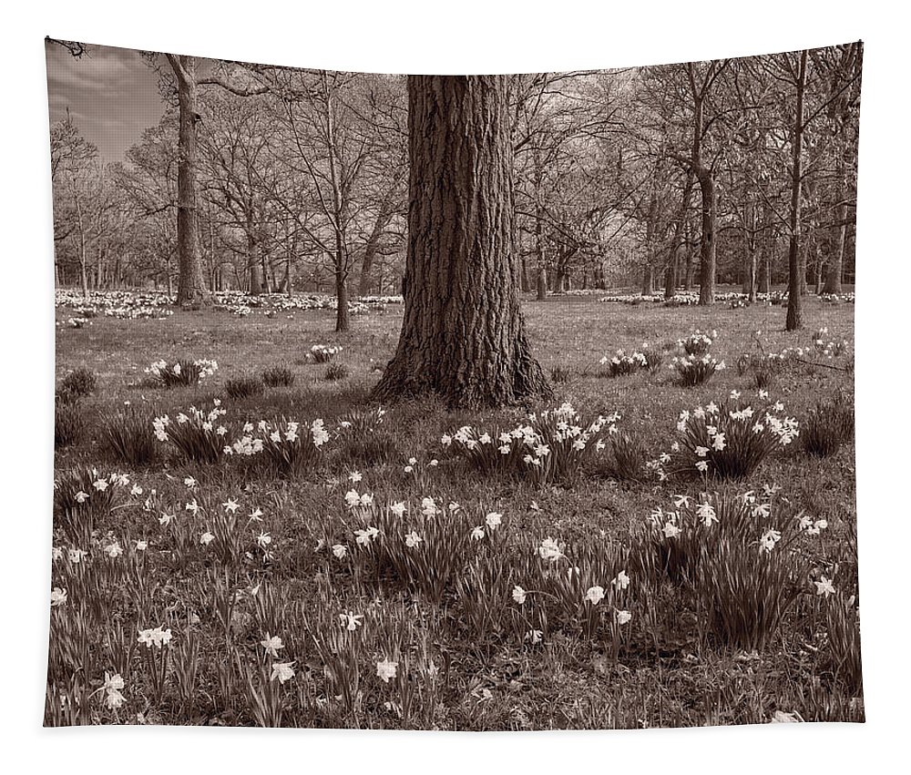 Daffodil Tapestry featuring the photograph Daffodil Glade Number 2 Bw by Steve Gadomski