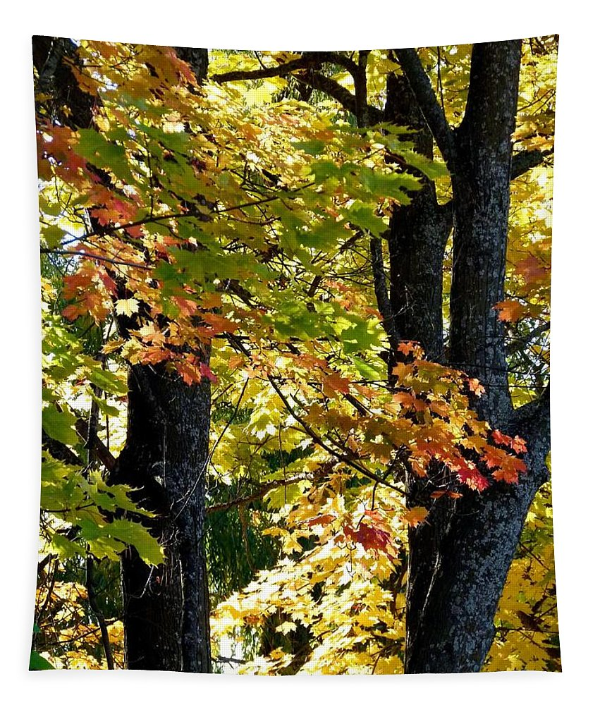 Dazzling Days Tapestry featuring the photograph Dazzling Days Of Autumn by Will Borden