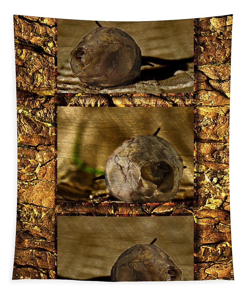 Rosebud Tapestry featuring the photograph Dead Rosebud Triptych by Steve Purnell