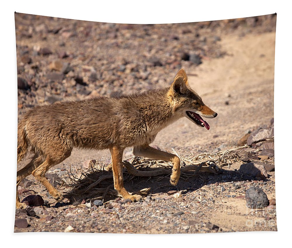 Coyote Tapestry featuring the photograph Death Valley Coyote by Mike Dawson