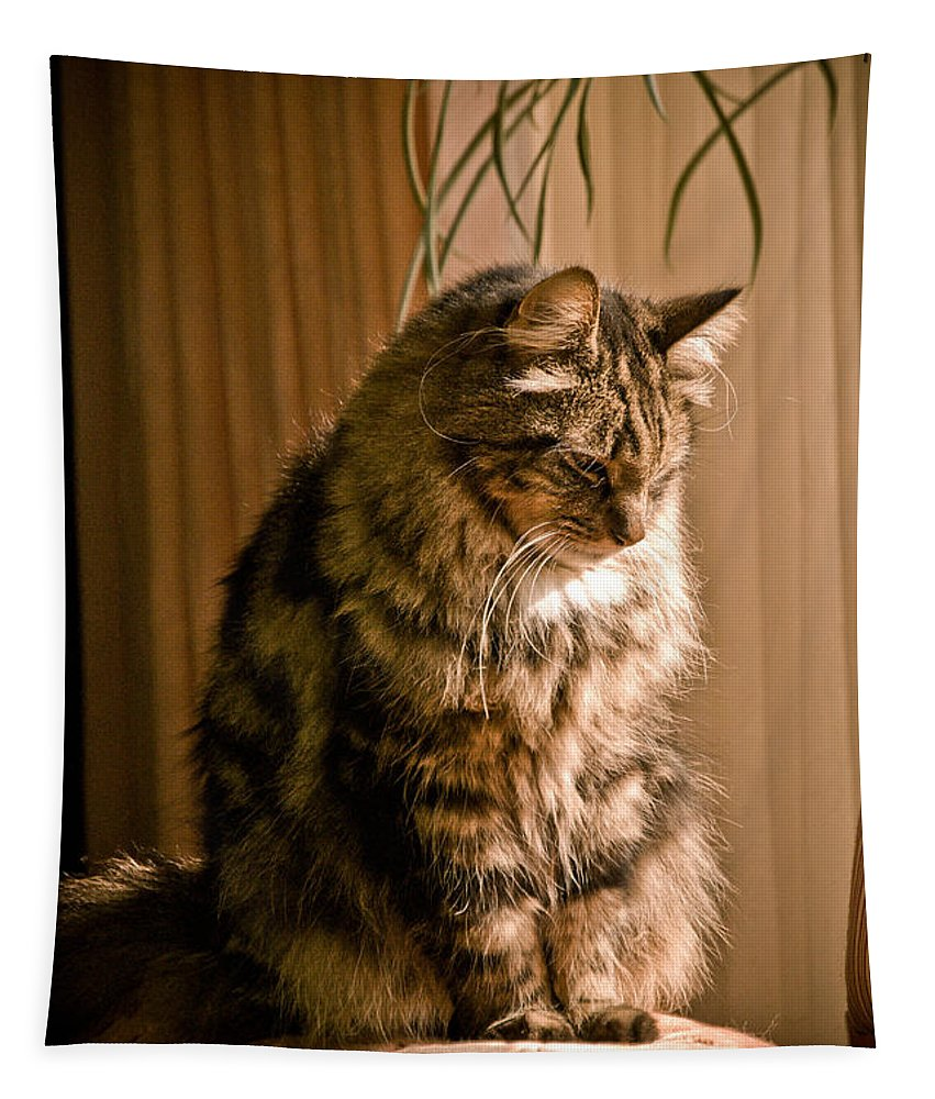 Cat Tapestry featuring the photograph Deep In Kitty Thought by Trish Tritz