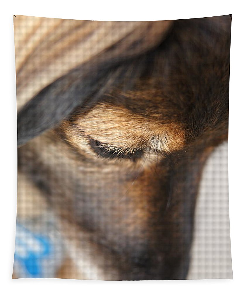 Dog Tapestry featuring the photograph Deep Thought by Megan Cohen