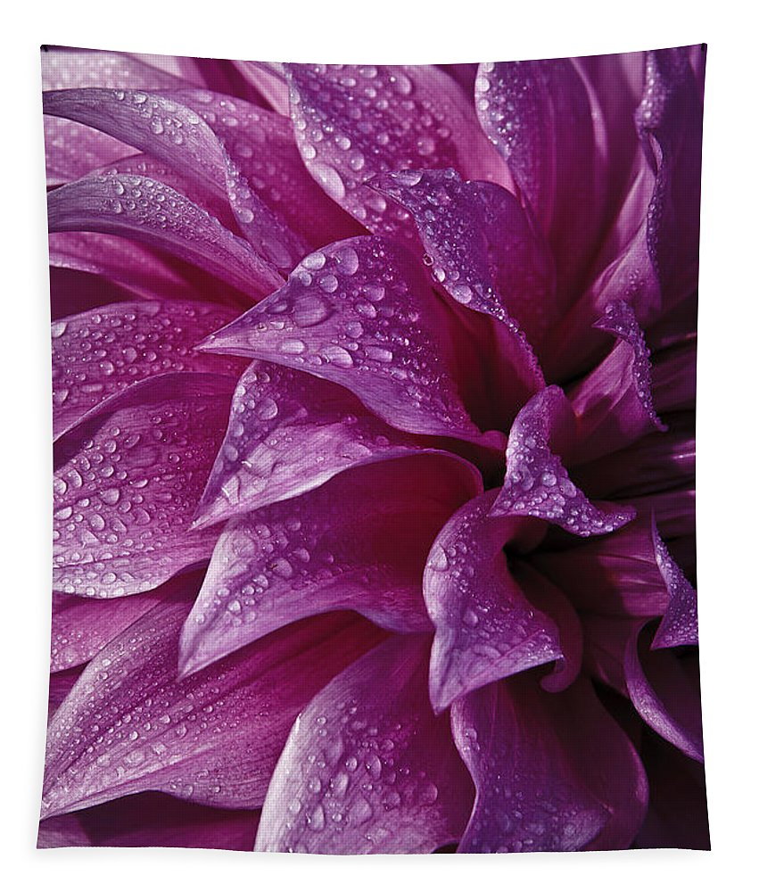 Dewy Dahlia Tapestry featuring the photograph Dewy Dahlia by Wes and Dotty Weber