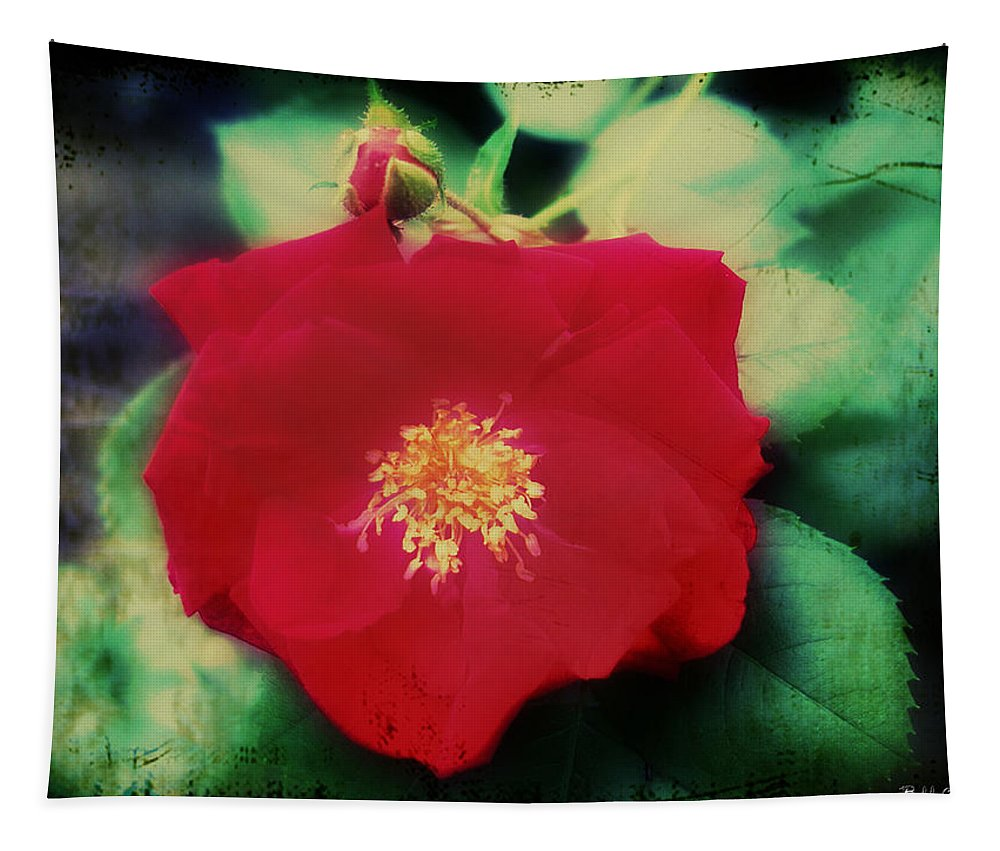 Dirty Rose Knows Tapestry featuring the photograph Dirty Rose Knows by Bill Cannon