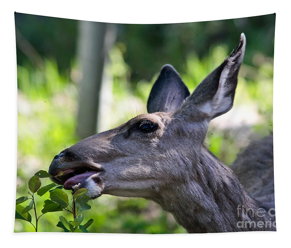 Doe Eye Tapestry featuring the photograph Doe Eye by Mitch Shindelbower