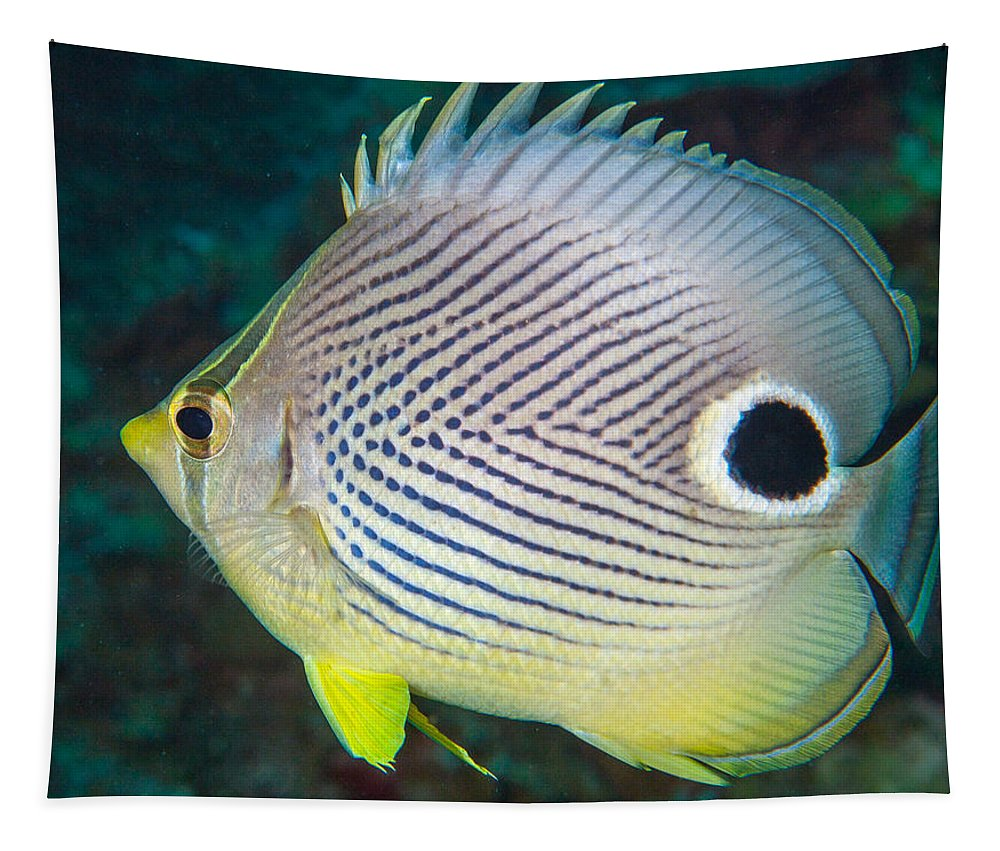 Belize Tapestry featuring the photograph Dont Eyeball Me by Jean Noren