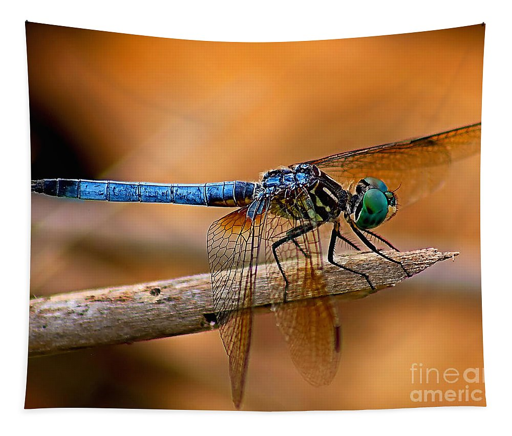 Animals Tapestry featuring the photograph Dragon Fly by Nick Zelinsky