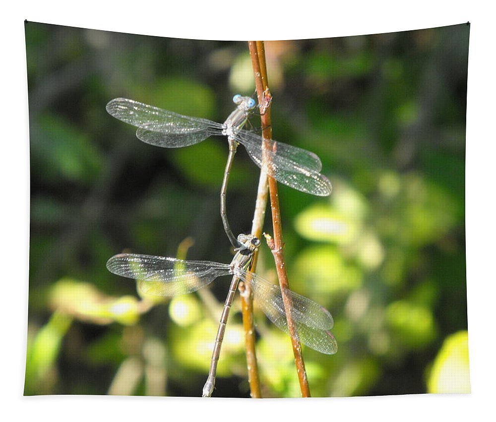 Dragonflies Tapestry featuring the photograph Dragonflies by Paulina Roybal