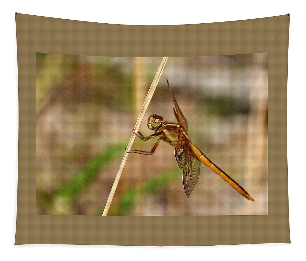Dragonfly Tapestry featuring the photograph Dragonfly Looking At You by Laurel Talabere
