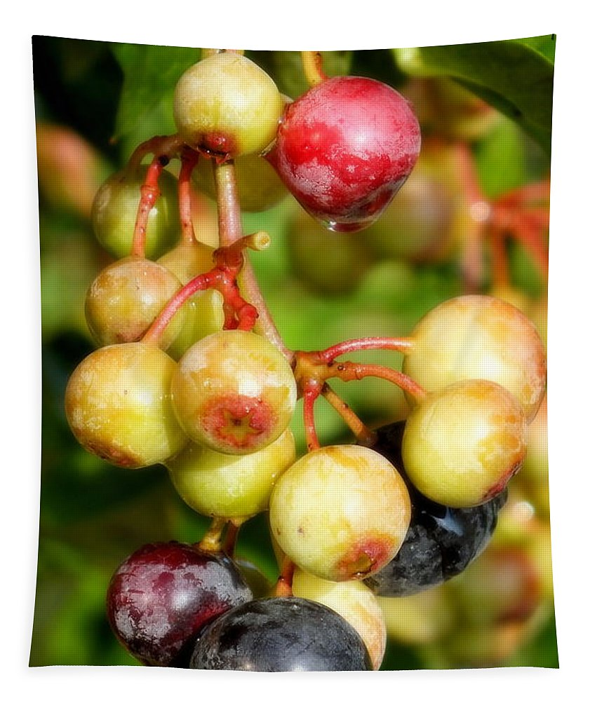 Blueberries Tapestry featuring the photograph Expectation by Karen Wiles