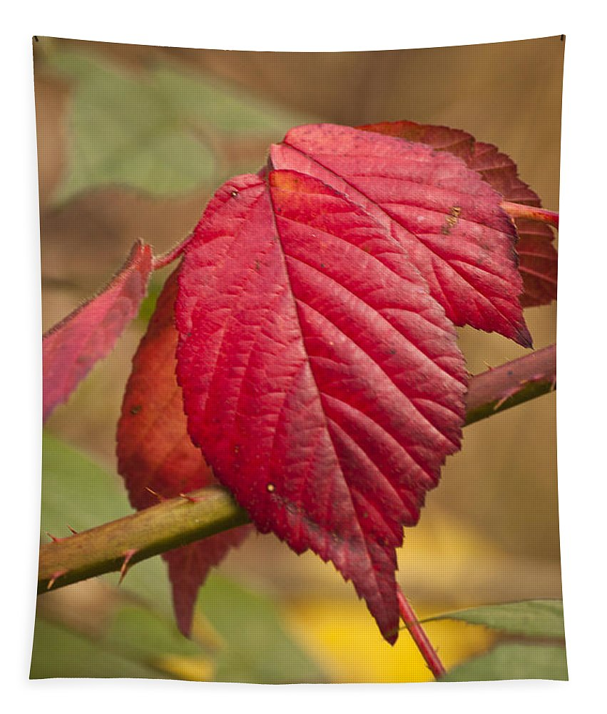 Autumn Leaves Tapestry featuring the photograph Fall Leaves by Steve Purnell