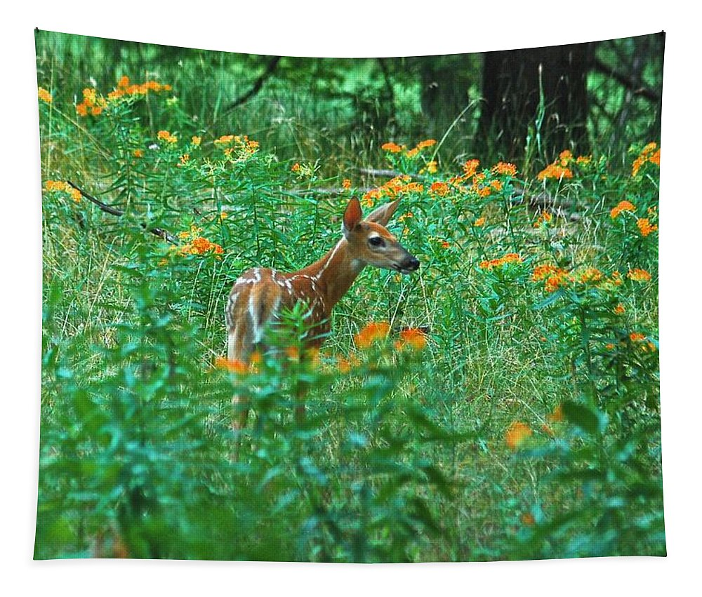 Daybreak Woods Tapestry featuring the photograph Fawn In A Field Of Milkweed by Michael Peychich