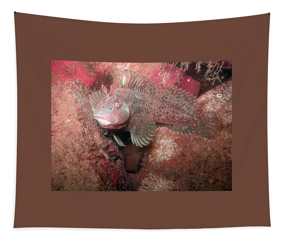 Female Feather Blenny Tapestry featuring the photograph Feather Blenny Female by Paul Ward