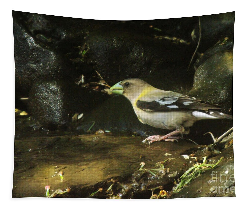 Birds Tapestry featuring the photograph Female Grossbeak by Jeff Swan