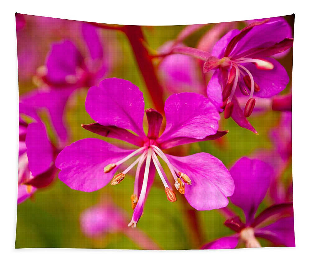 Wildflower Tapestry featuring the photograph Fireweed by Tikvah's Hope