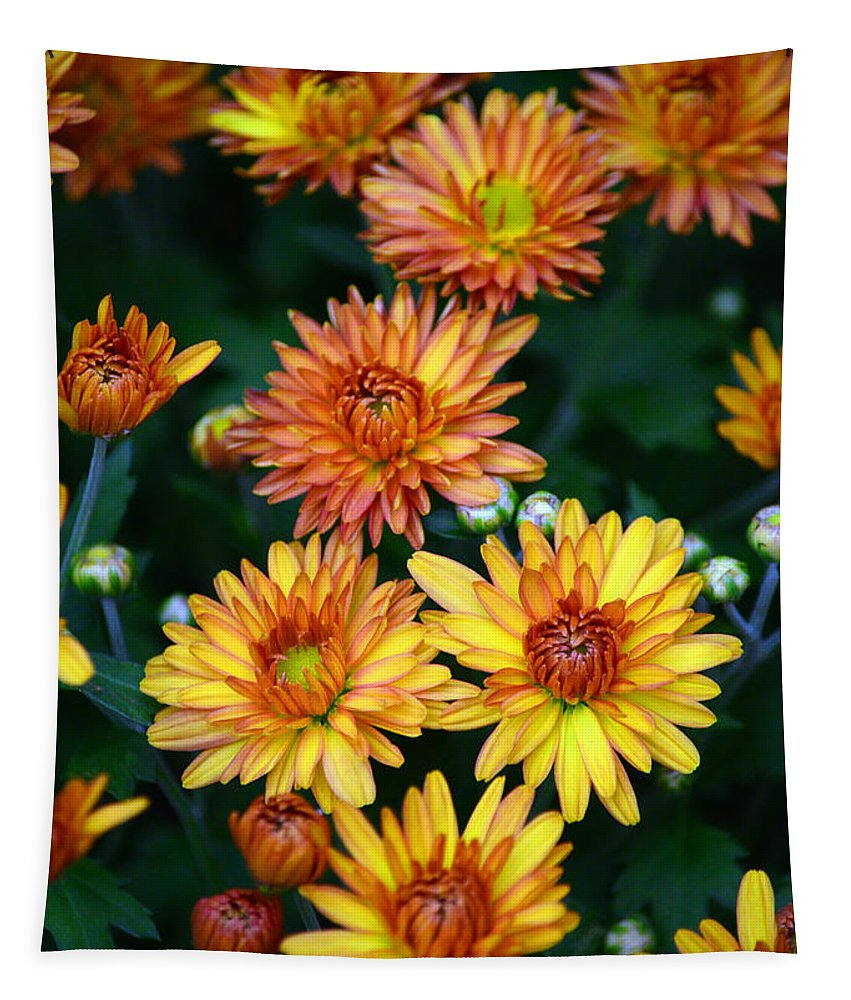 Mums Tapestry featuring the photograph First Fall Mums by Sandi OReilly