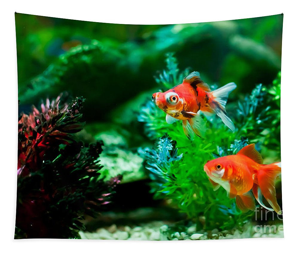 Fish Tapestry featuring the photograph Fish Tank by Matt Malloy