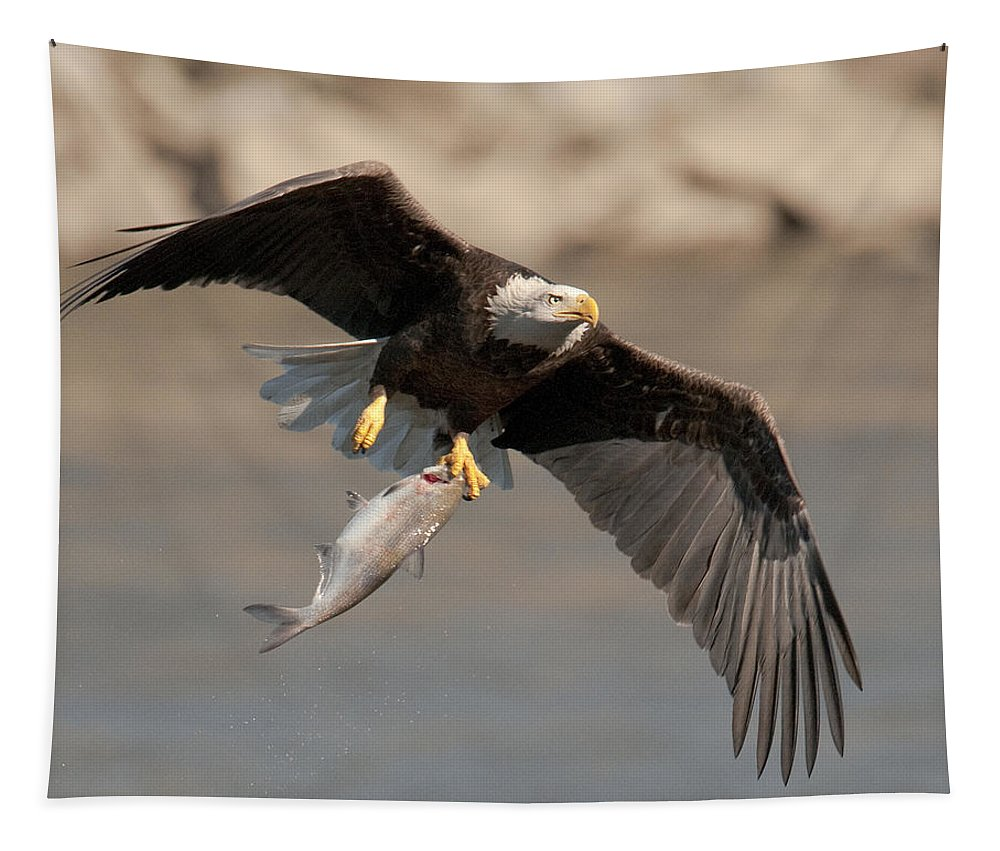 Bald Eagle Tapestry featuring the photograph Fish To Go by Craig Leaper