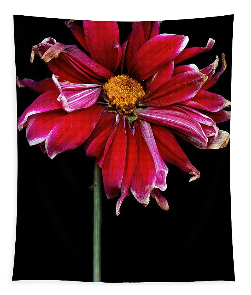Flower Tapestry featuring the photograph Flower - Bad Hair Day by Mike Savad