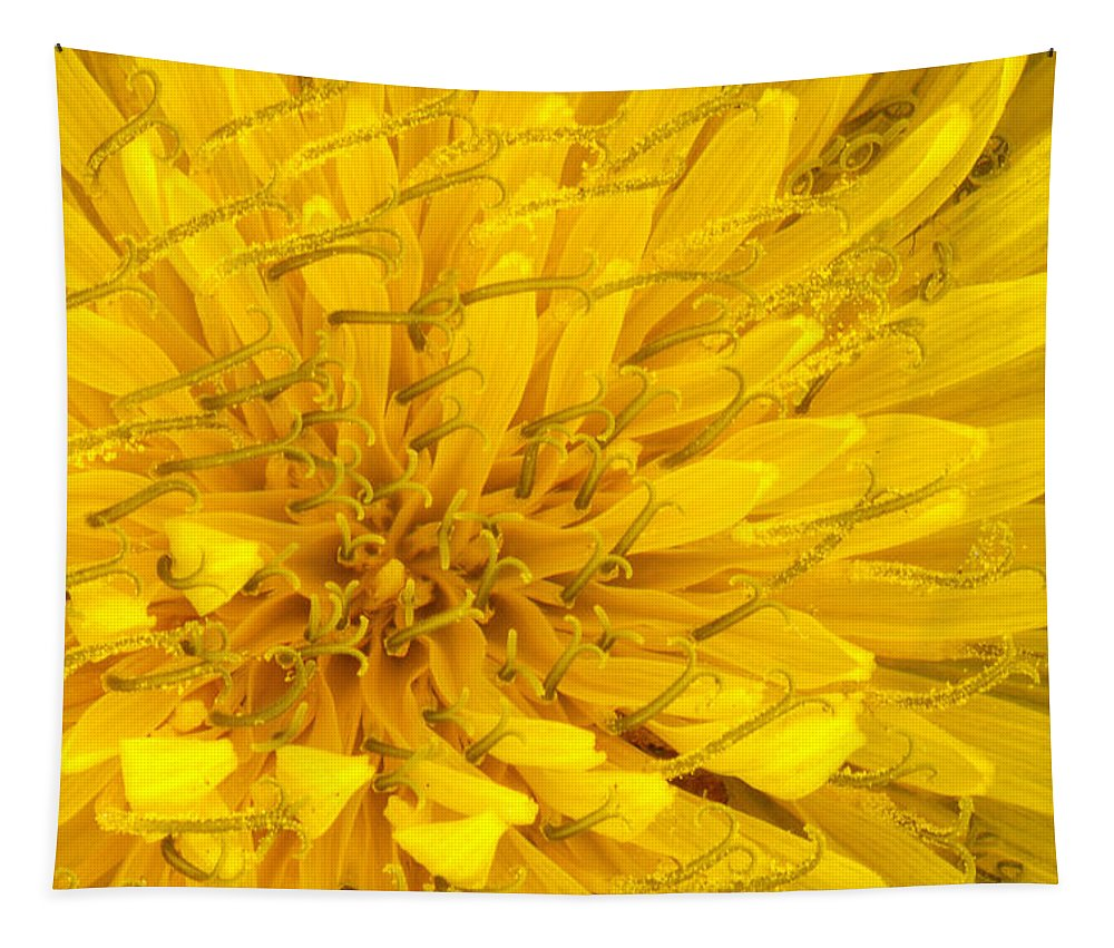 Flower Tapestry featuring the photograph Flower - Dandelion by Mike Savad