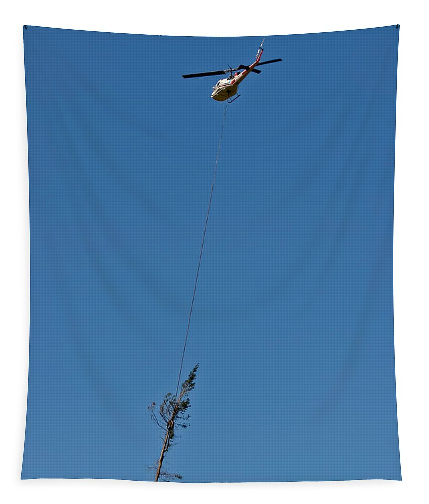 Flying Pine Tapestry featuring the photograph Flying Pine by Mitch Shindelbower
