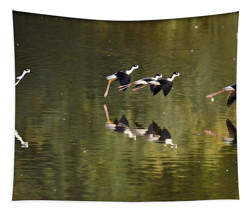 Stilts Tapestry featuring the photograph Follow The Leader by Saija Lehtonen