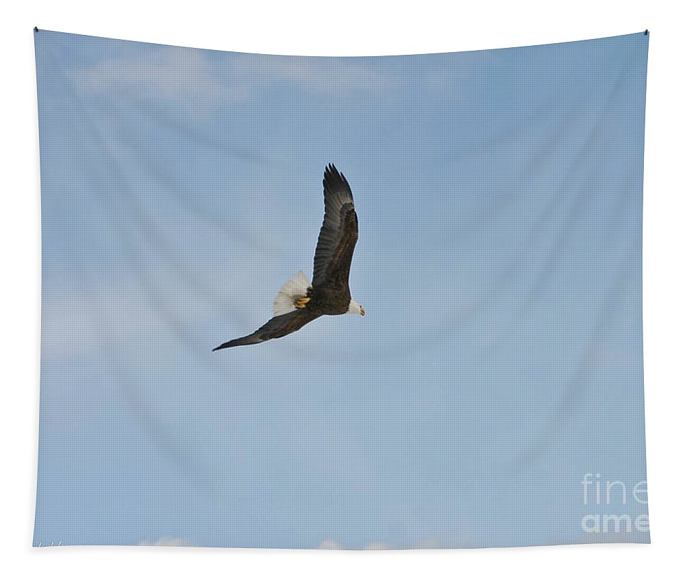 Bald Eagle Tapestry featuring the photograph Free Flight by Mitch Shindelbower