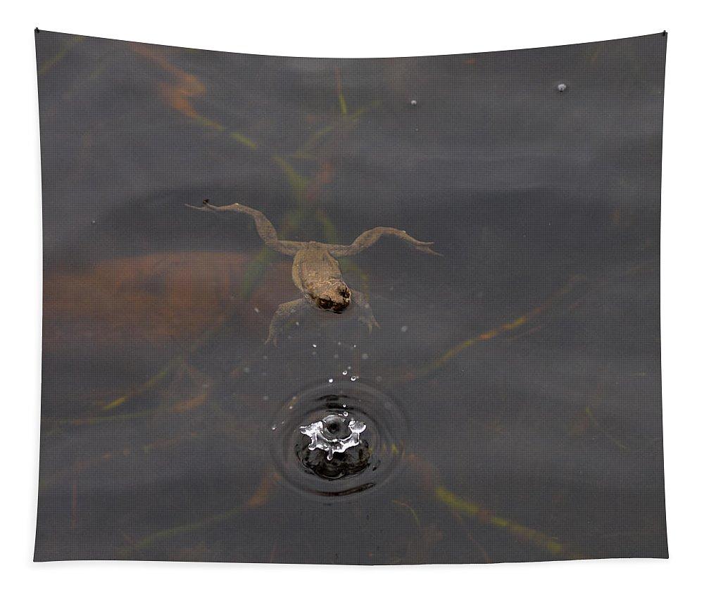 Lehtokukka Tapestry featuring the photograph Frog In The Rain by Jouko Lehto