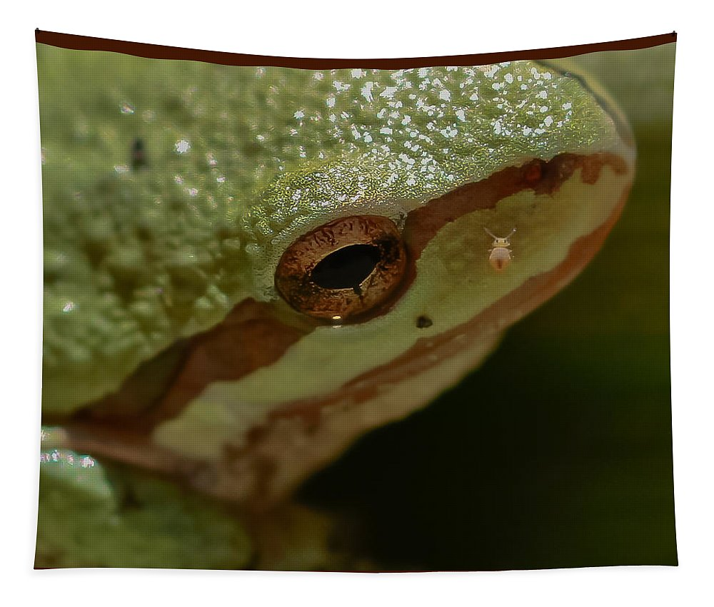 Frog Skin Tapestry featuring the photograph Frog Skin by Mitch Shindelbower