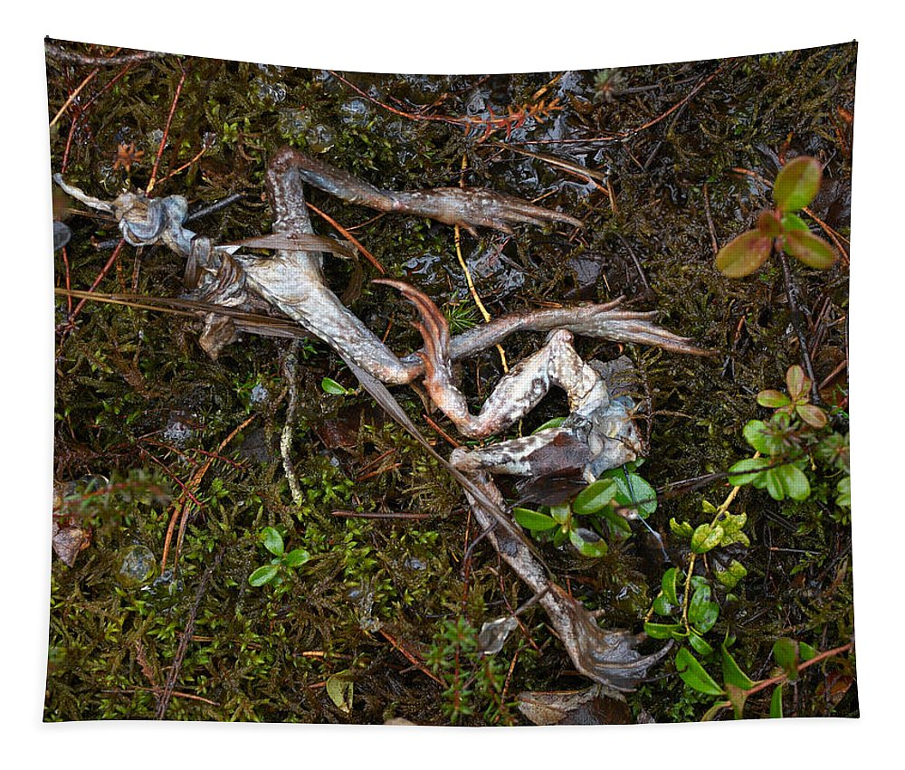 Lehtokukka Tapestry featuring the photograph Frogs After The Fiesta by Jouko Lehto