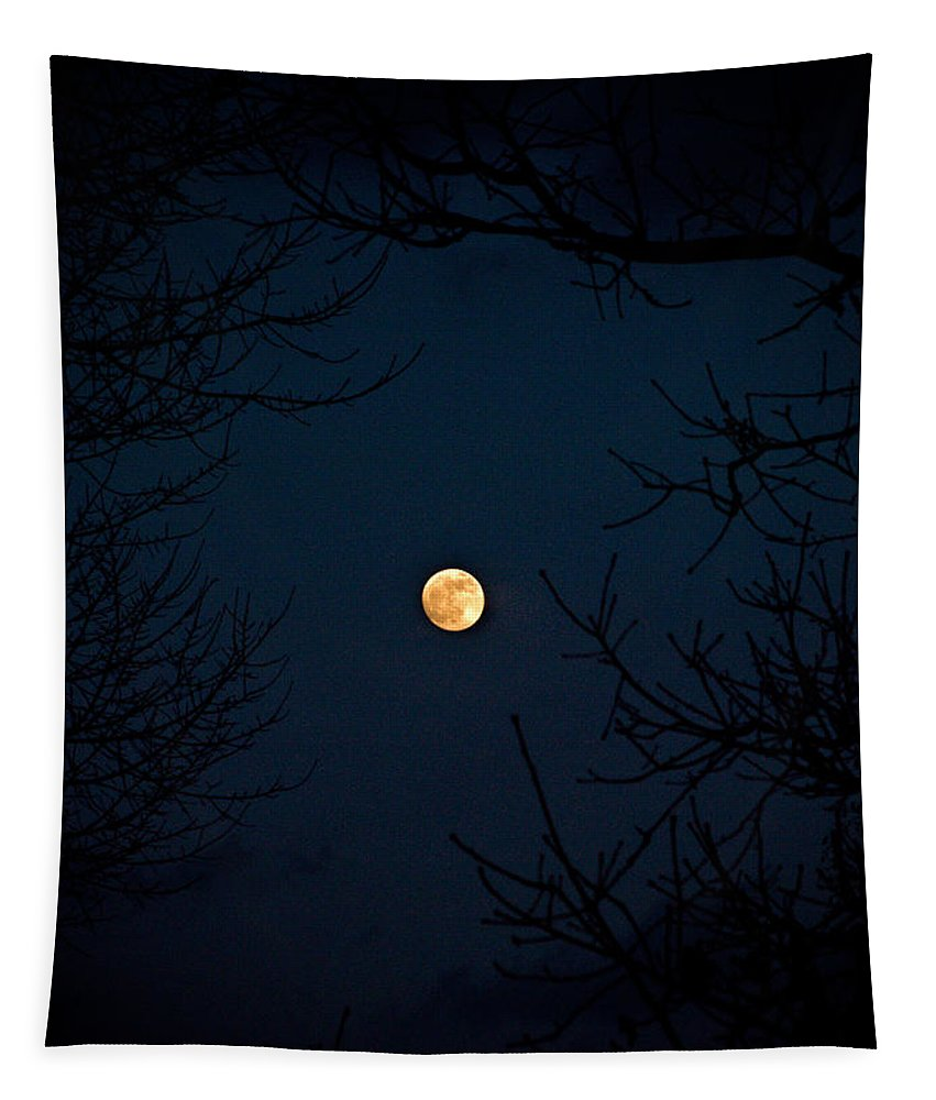 Tree Tapestry featuring the photograph Full Moon On A Winter's Night by Trish Tritz