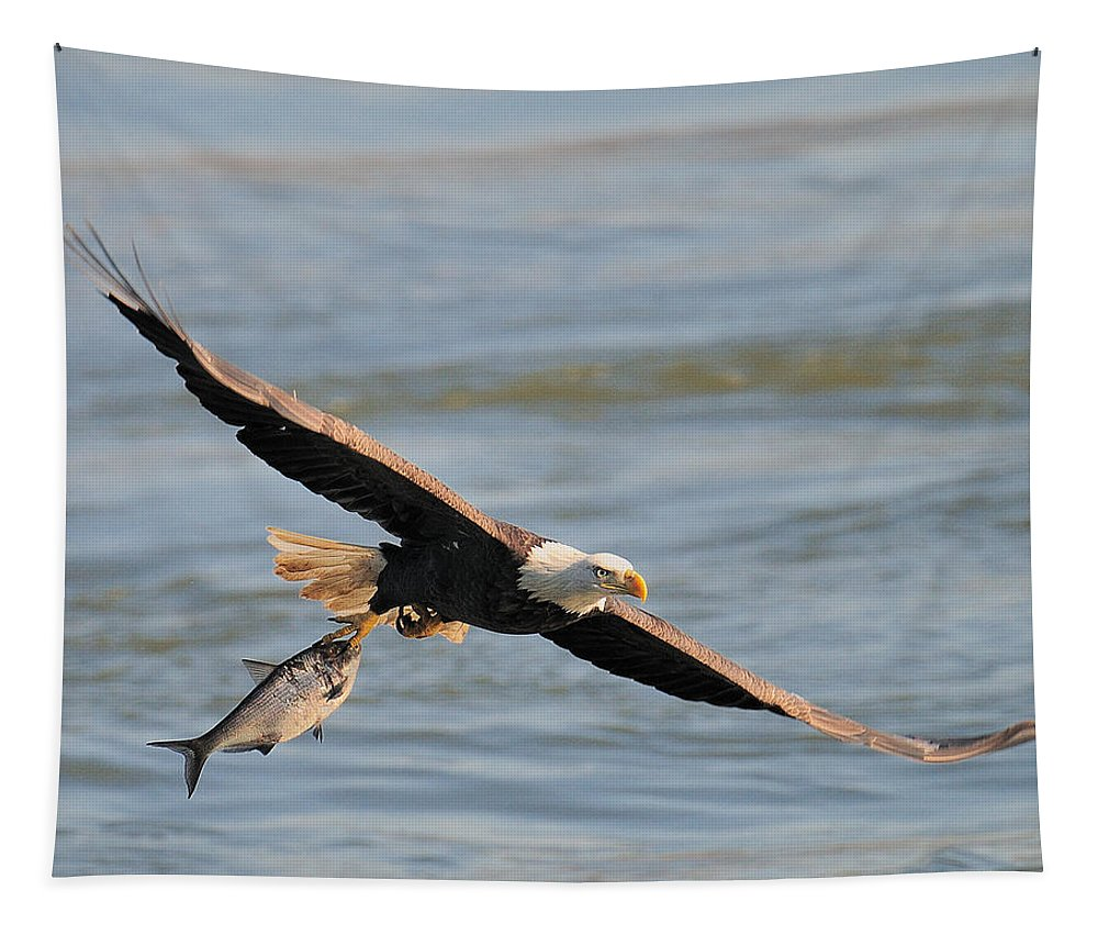Bald Eagle Tapestry featuring the photograph Get A Grip by Craig Leaper