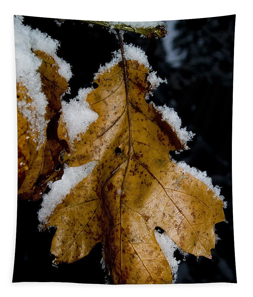 Yosemite Valley Tapestry featuring the photograph Golden Leaf by Bill Gallagher