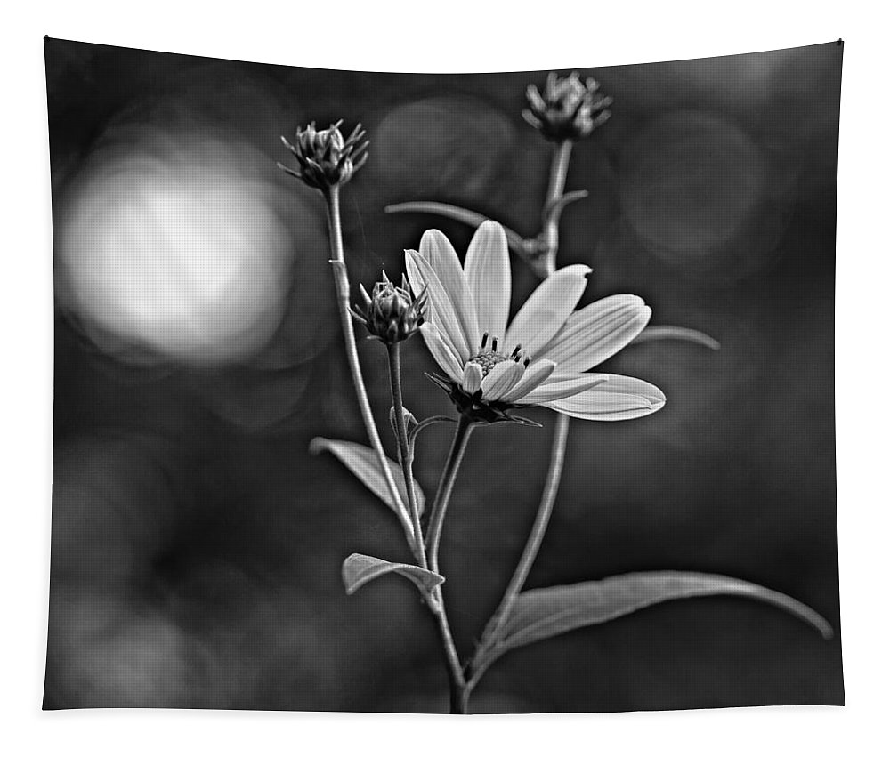 Weed Tapestry featuring the photograph Good Morning Bw by Steve Harrington