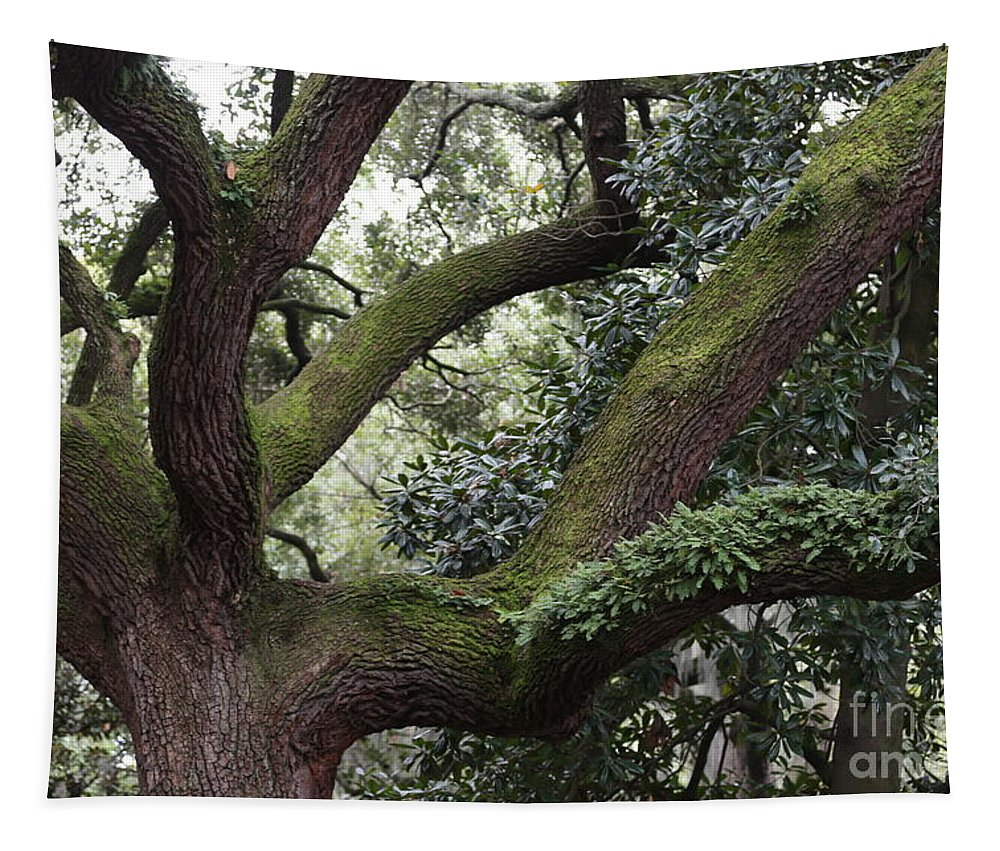 Savannah Tree Tapestry featuring the photograph Grand Dame Of Savannah by Carol Groenen