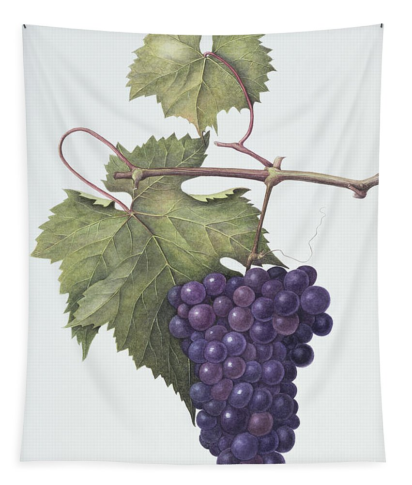 Bunch; Fruit; Purple; Red; Grape; Still Life; Branch; Grapes; Leaf; Leafs Tapestry featuring the painting Grapes by Margaret Ann Eden