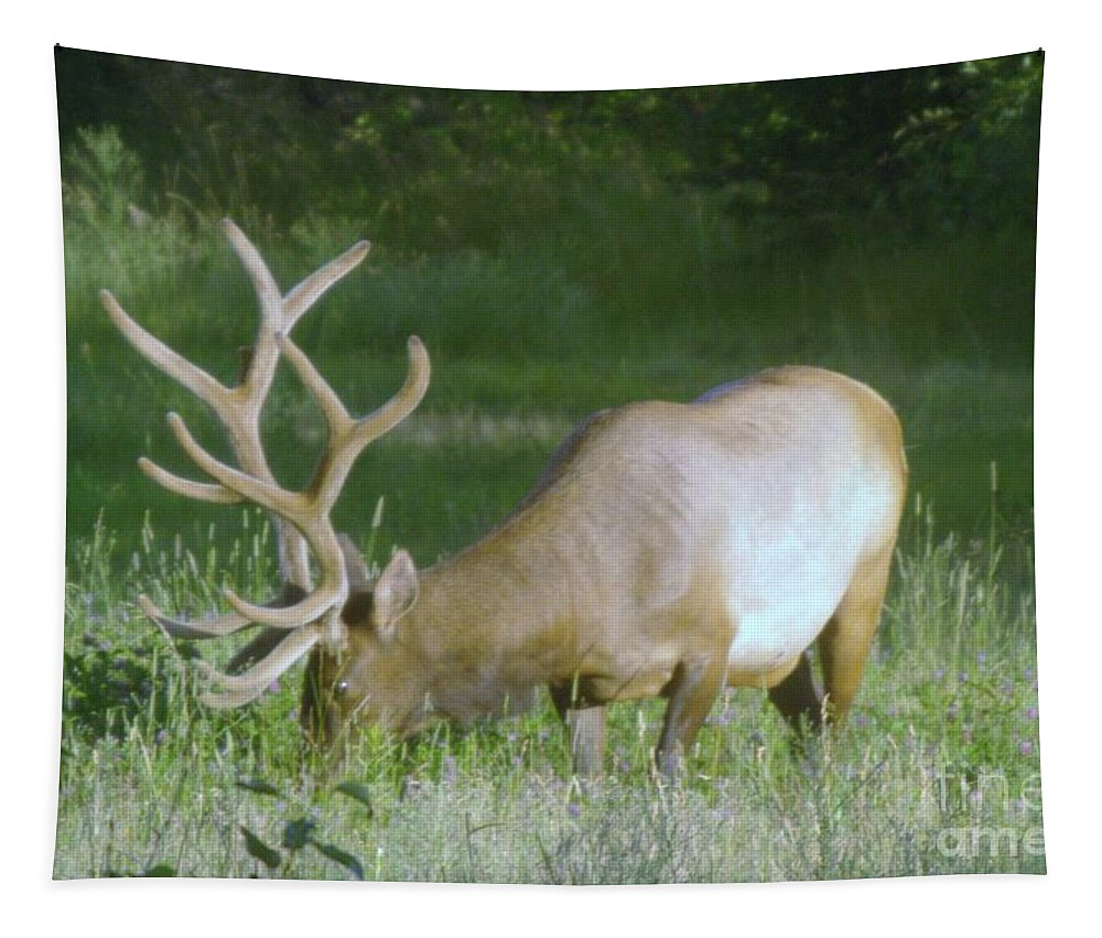 Elk Tapestry featuring the photograph Grazing Elk by Jeff Swan