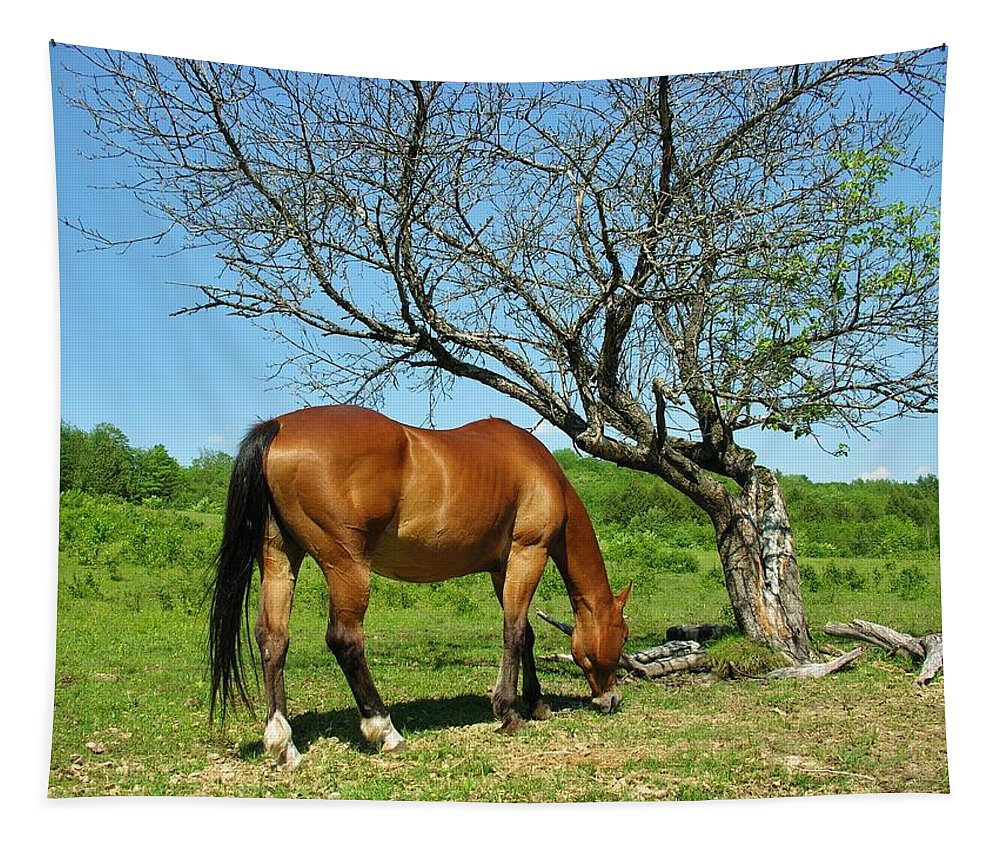 Grazing Horse Tapestry featuring the photograph Grazing by Sherman Perry
