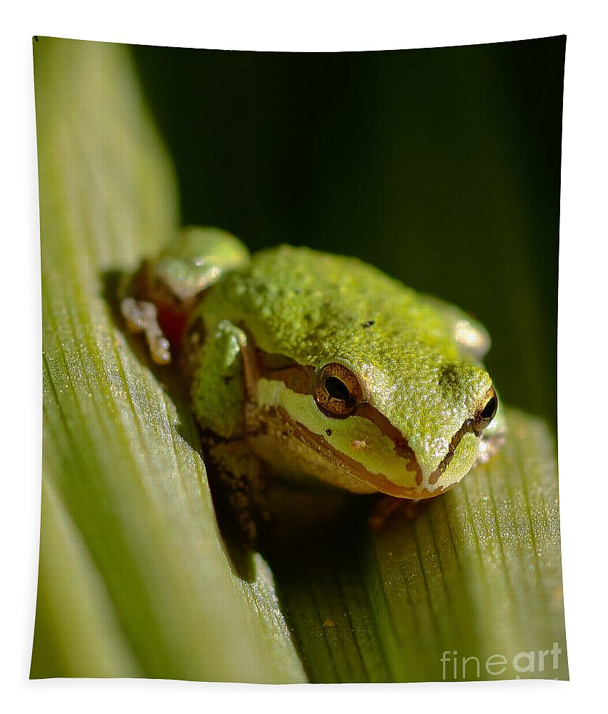 Green Frog Tapestry featuring the photograph Green Frog 2 by Mitch Shindelbower