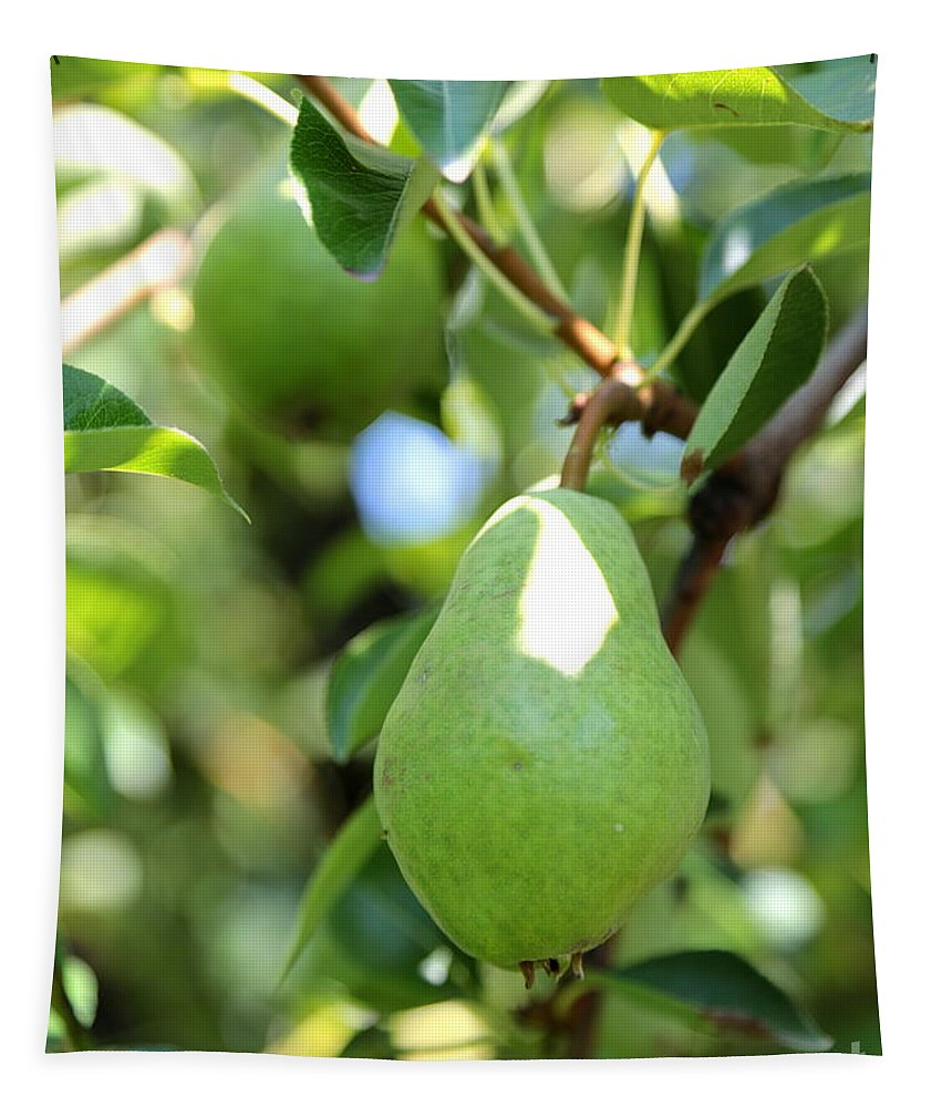 Pear Tapestry featuring the photograph Green Pear by Carol Groenen