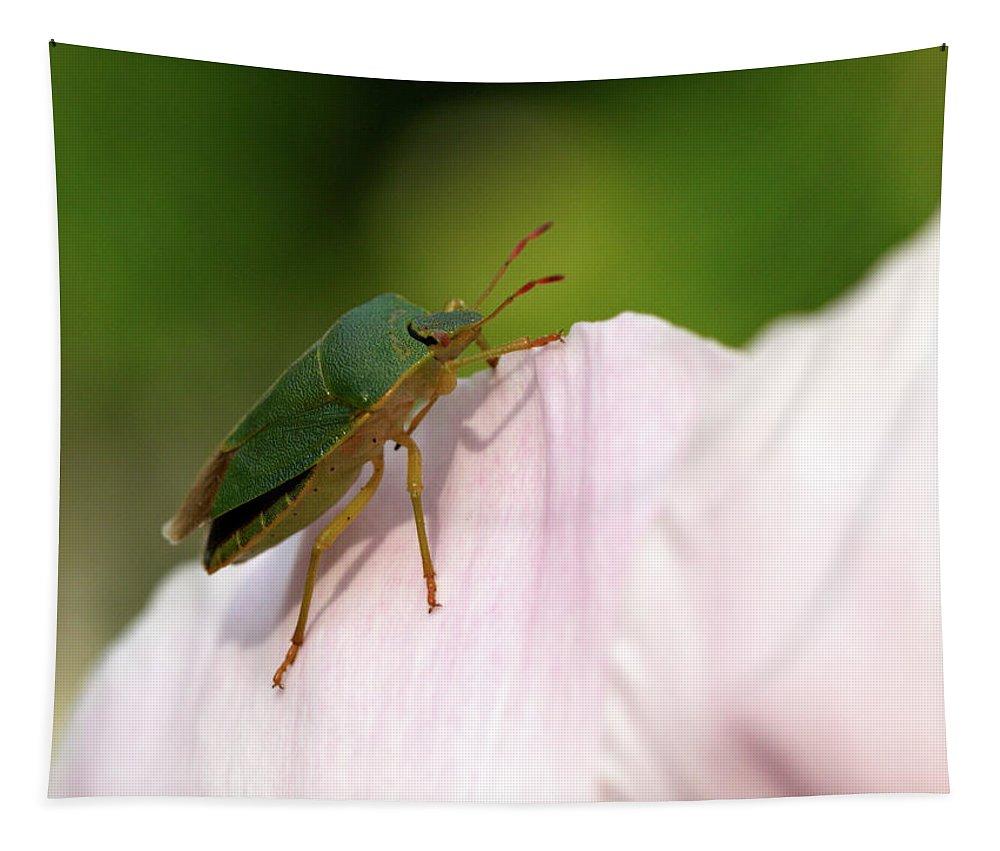 Jouko Lehto Tapestry featuring the photograph Green Shieldbug 2 by Jouko Lehto
