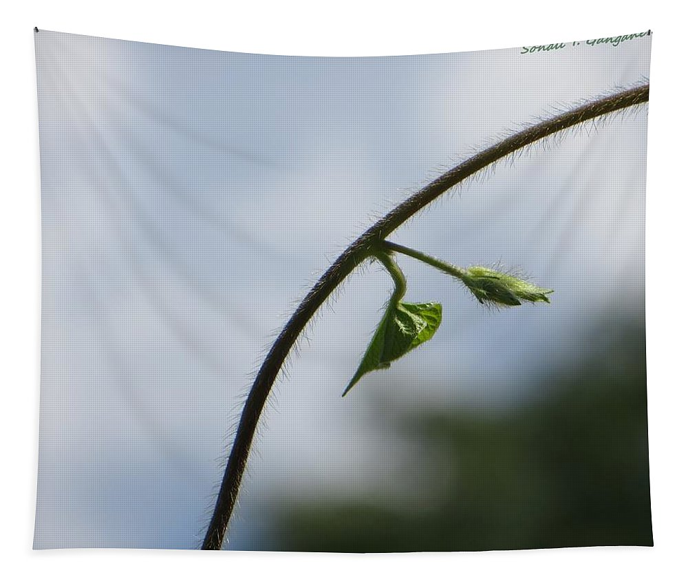 Pristine Beginning Tapestry featuring the photograph Green Span by Sonali Gangane