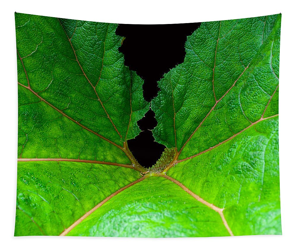 Large Leaf Tapestry featuring the photograph Green Spider Leaf by Tikvah's Hope