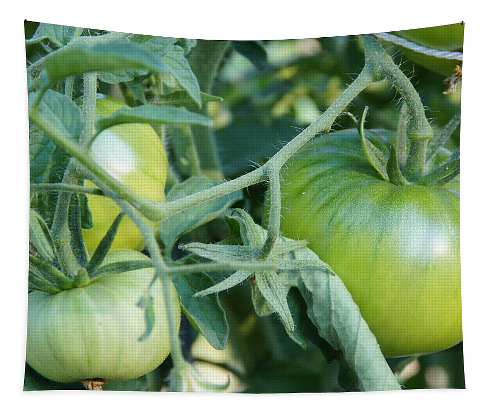 Green Tapestry featuring the photograph Green Tomato On The Vine by Mick Anderson