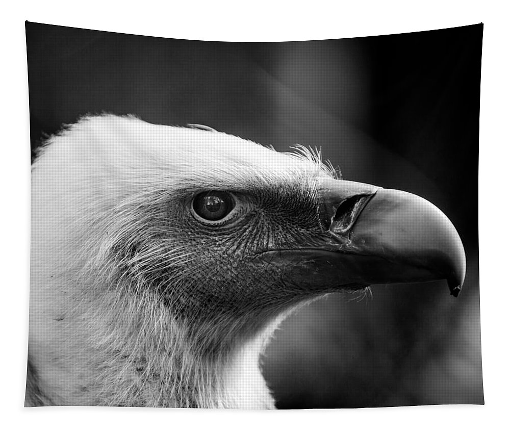 Griffon Tapestry featuring the photograph Griffon Vulture by Hakon Soreide