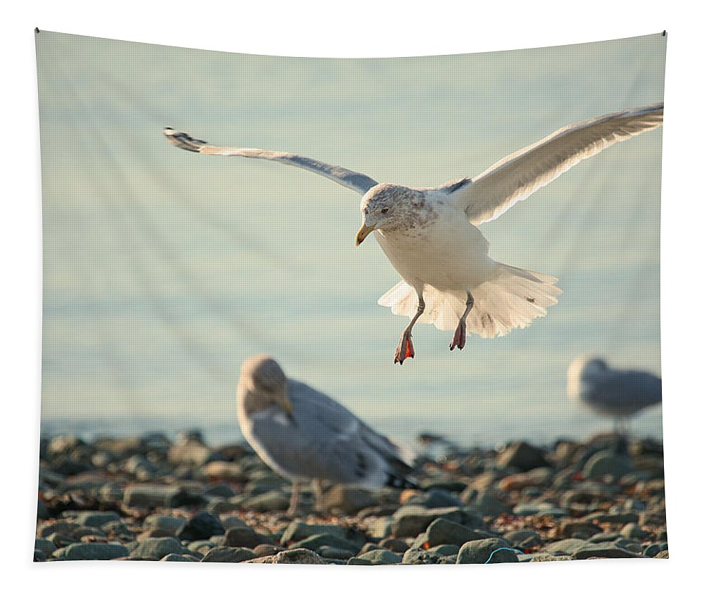 Seagull Tapestry featuring the photograph Gull Landing by Karol Livote