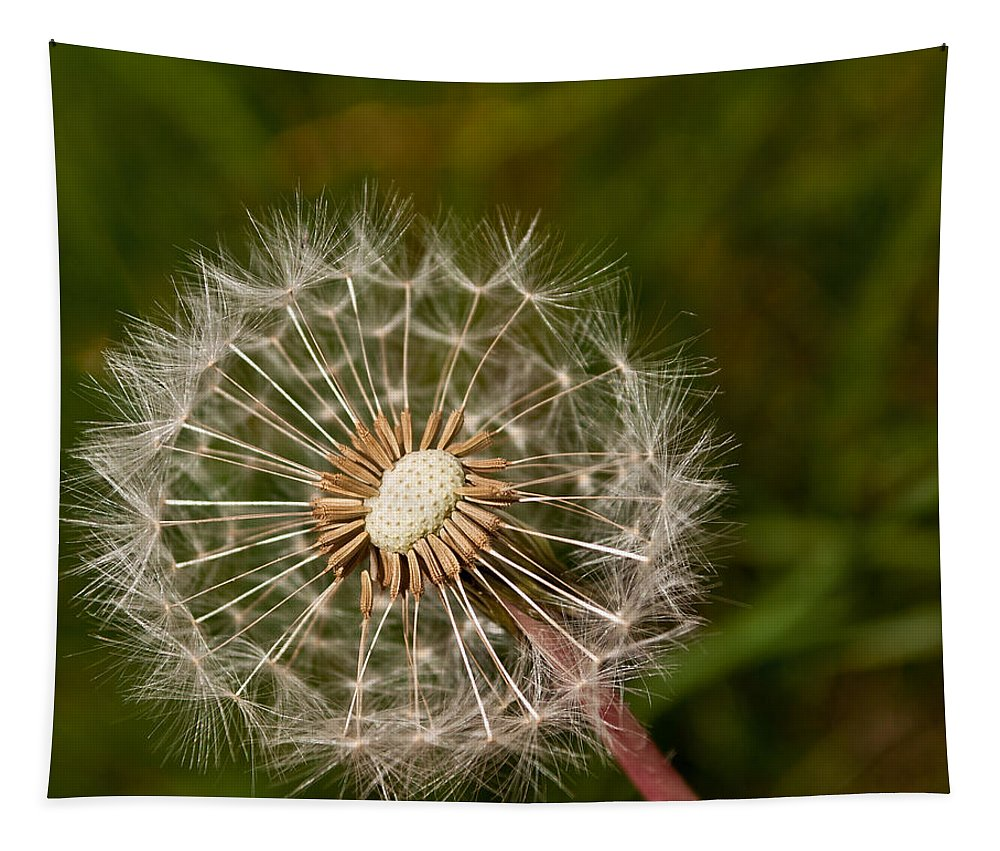 White Tapestry featuring the photograph Half A Dandelion by Tikvah's Hope